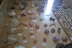museo_campano_8